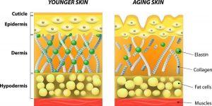 Vitamin C, skin, collagen elastin