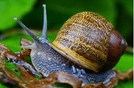 snail secretion, skin