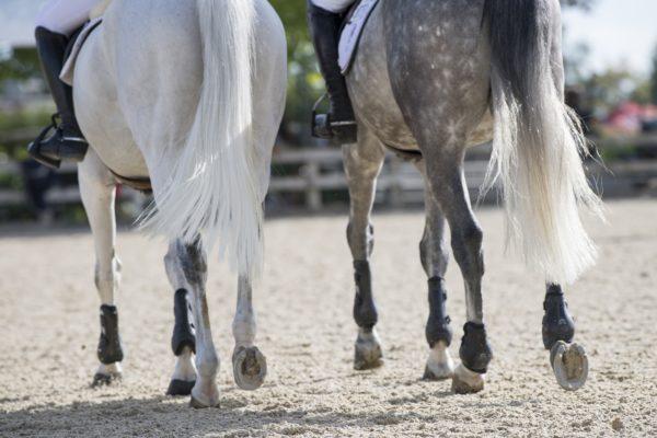 Horse legs, PEA,